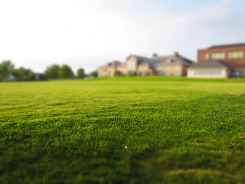 Different Types of Artificial Grass: A Quick Guide